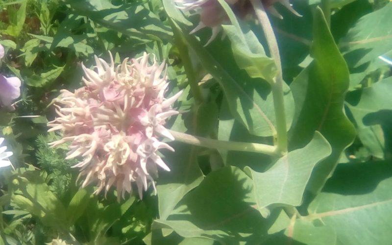 Зелёное растение с фиолетово- белыми цветками