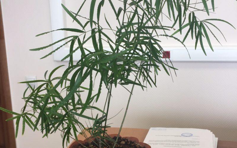 Помогите идентифицировать растение!
