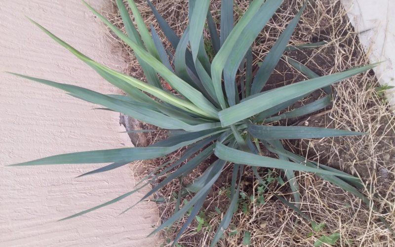 Зелоное растение
