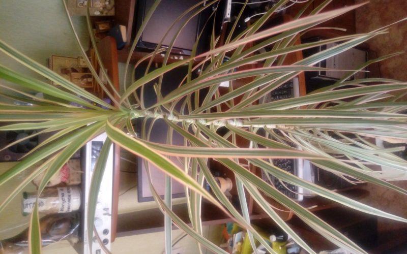 Нашла на помойке, что это за растение?