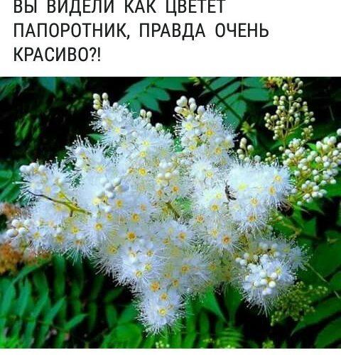 растение типа папоротника, но с цветами