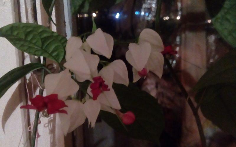 Деревообразный цветок зеленые дистья
