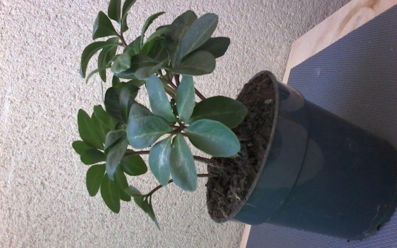 Зеленое растения с белыми цветами