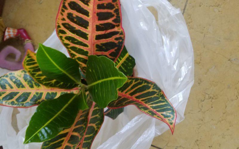 Зеленое растение с разноцветными листьями