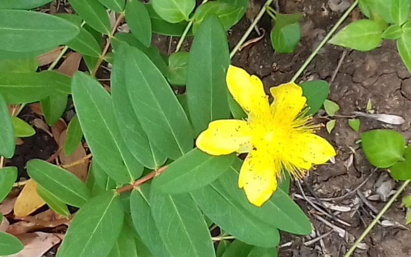 Зелёное растение с жилыми цветами