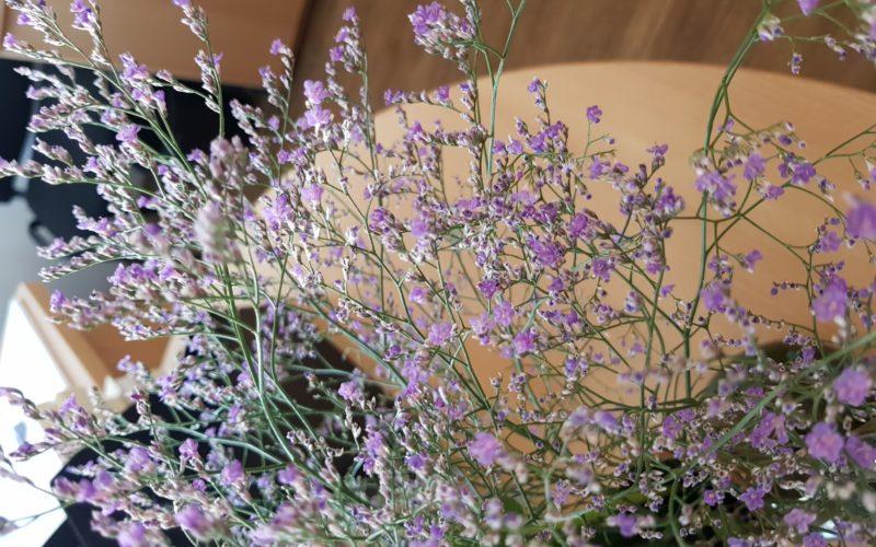 Растение с мелким сиреневые цветком