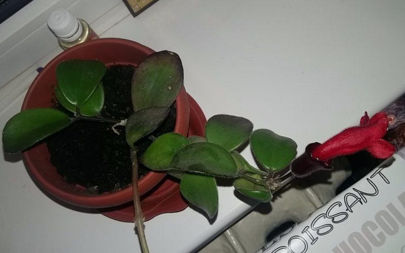 Зеленое растение с красным цветком