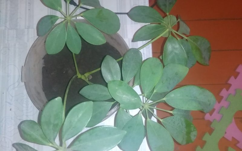 Зелёное растение, без цветов
