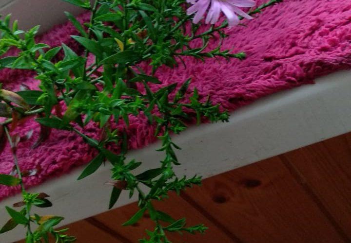 Неизвестное растение))