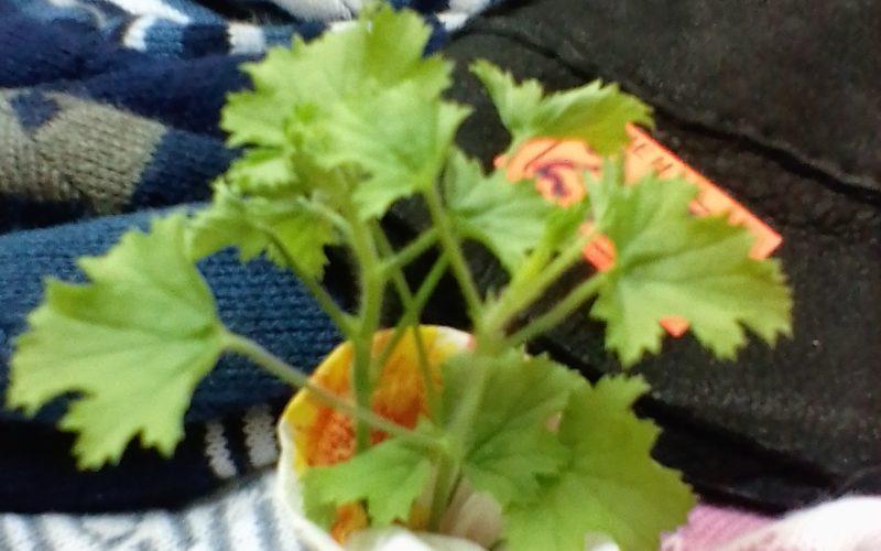 Зеленое растение с не крупными листьями