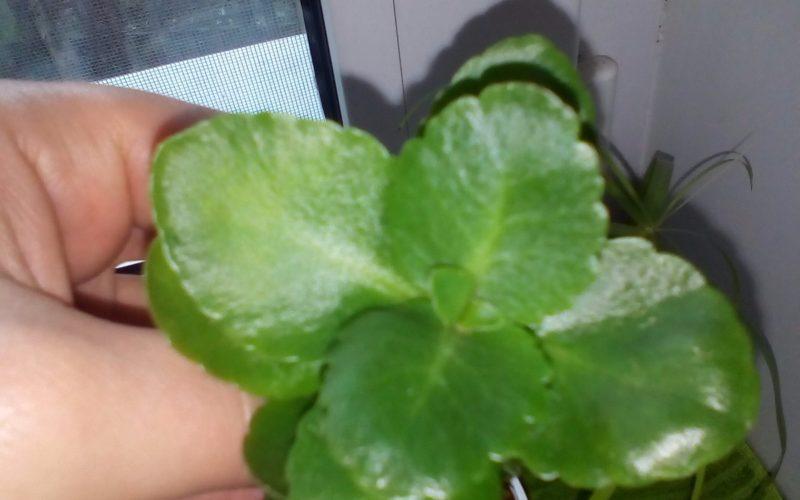 Зелёное растение.