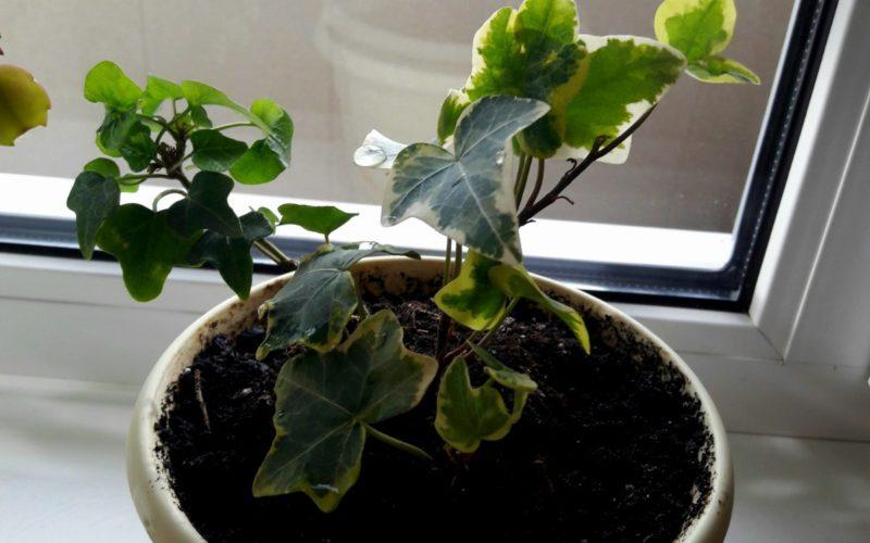 Как называется растение