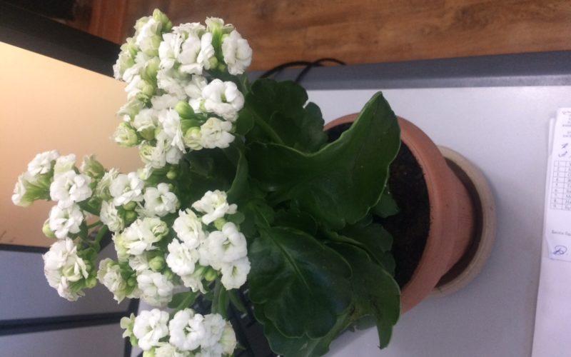 Зеленое с белыми цветками