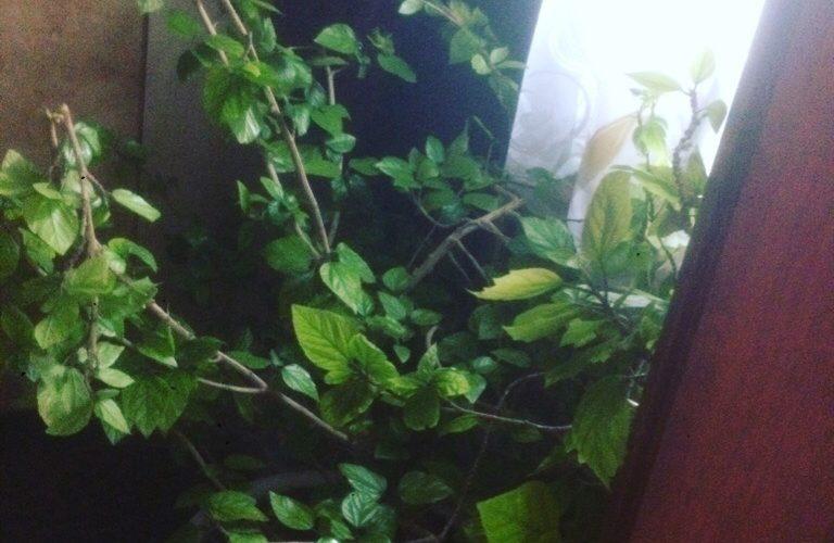 Помогите пожалуйста! Что это за растение ?
