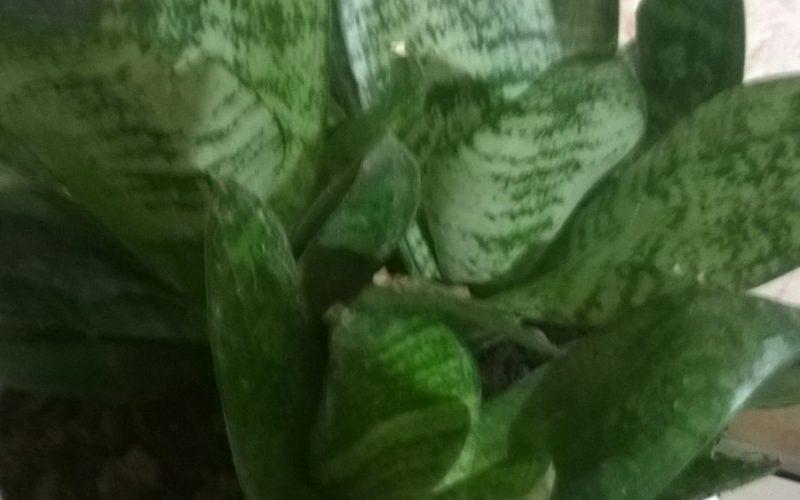 Зелёное растение экзотического вида