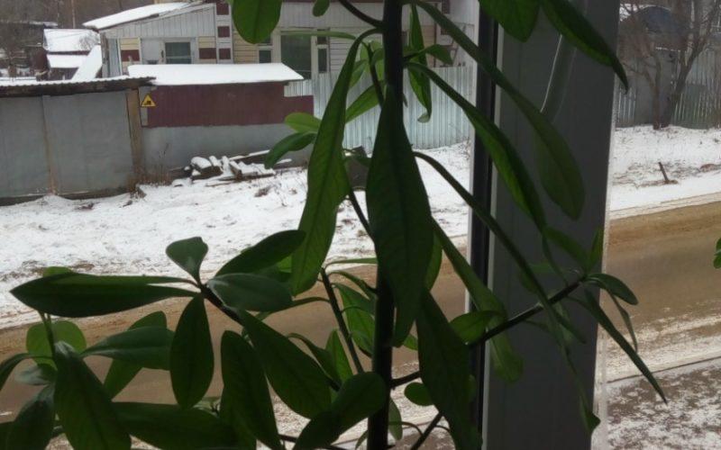 Зелёное растения с толстым стволом