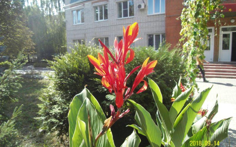 Высокое растение с большими листьями и красными цветами