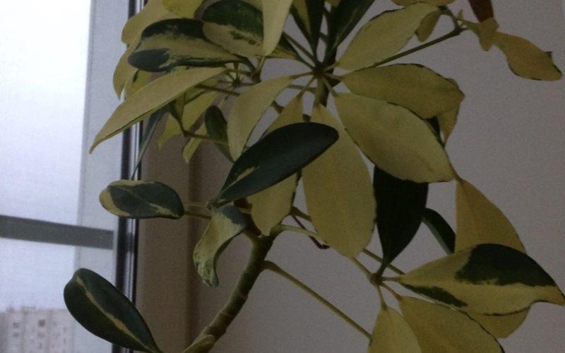 Название растения и уход за ним ?