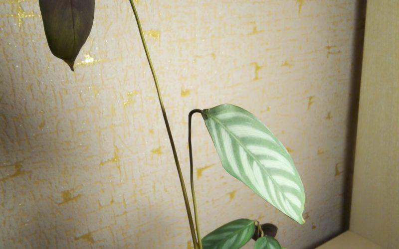 подскажите пожалуйста что это за растение