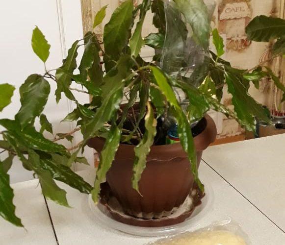 Зеленый кустик с длинными листьями