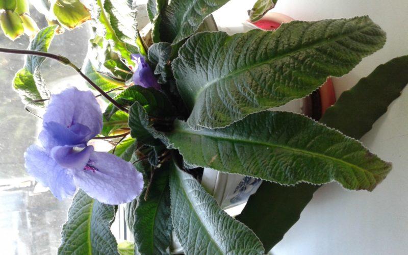 Зелёный цветок с фиолетовым и цветами