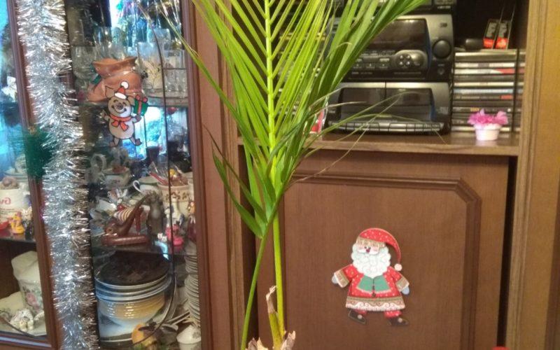 Помогите, пожалуйста, распознать цветок