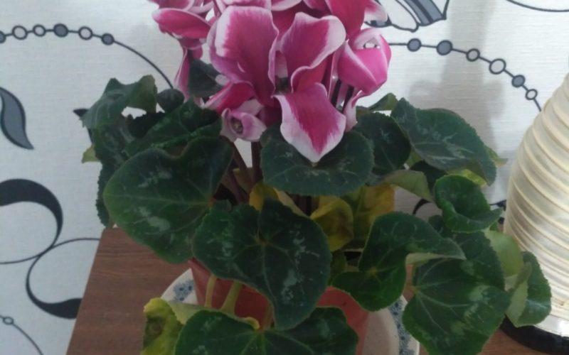 Зелёное растение с красными цветами