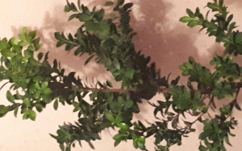 Зеленое дерево с многочисленными листьями