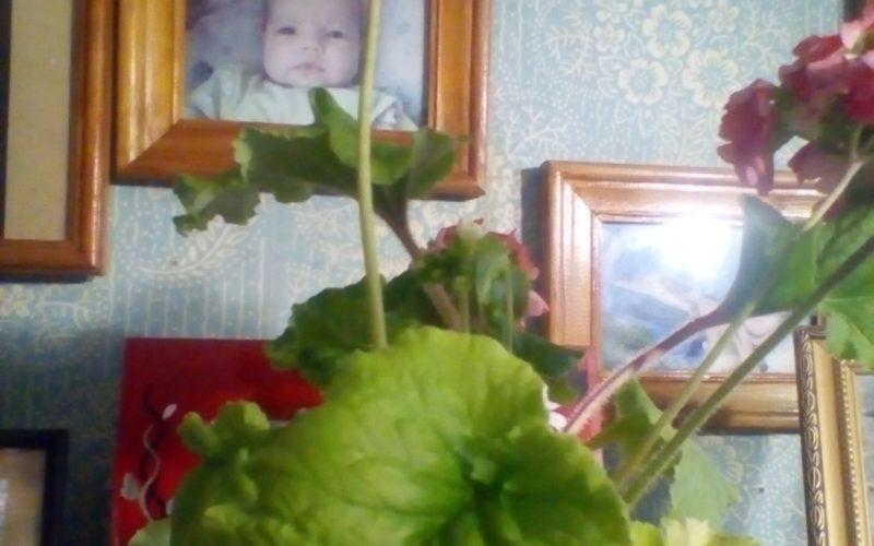 Зеленое растение с красно оранжевыми цветами