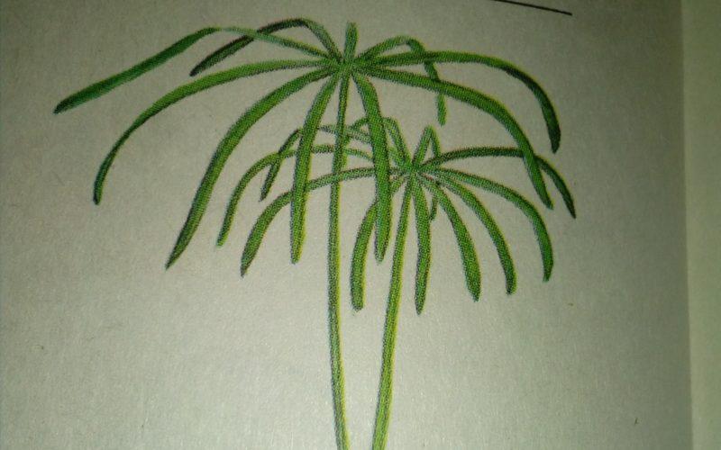 Зеленое растение как зонтик