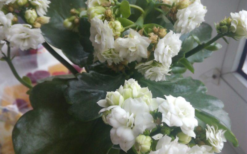 Что за Цветок ??