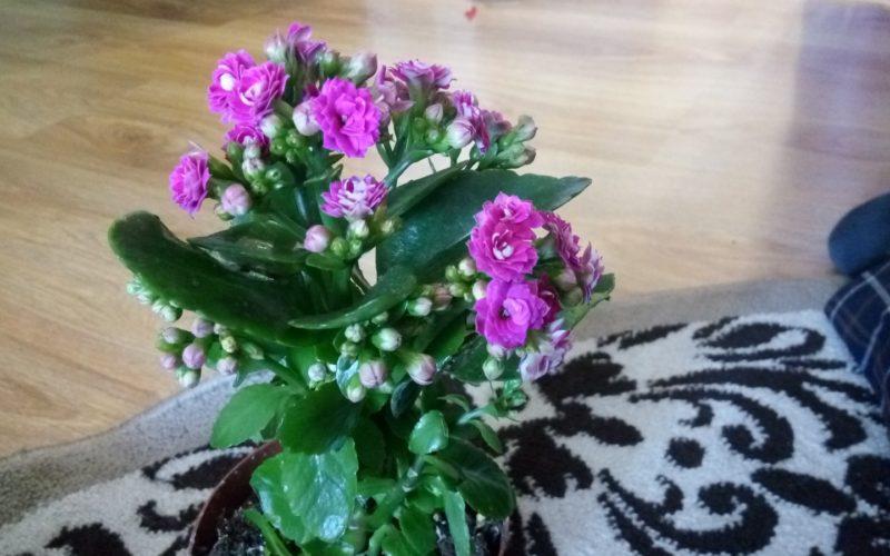 Зеленый с розовыми цветами