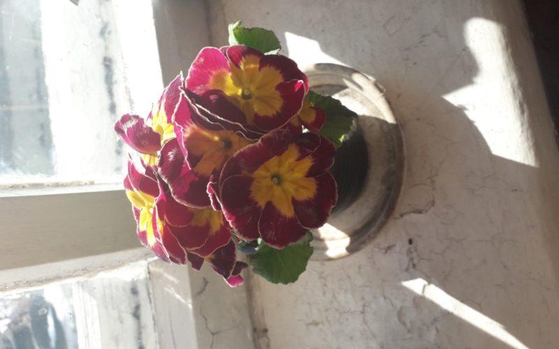 Зеленое растение с фиолетово- желтыми цветамм