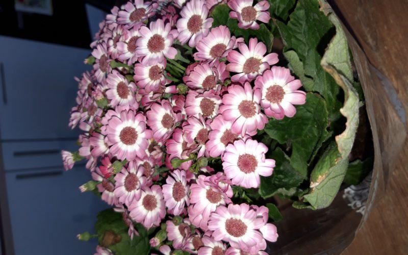 Зеленое растение с сиреневыми цветочками