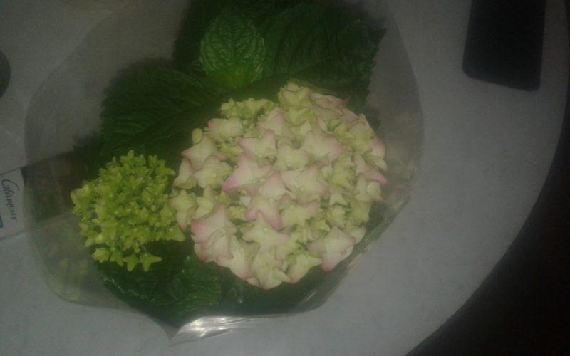 Зеленое растение с зеленовато-розоватыми цветами