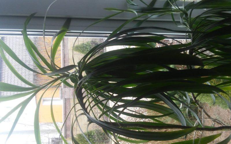зеленое растение высотой метр-полтора