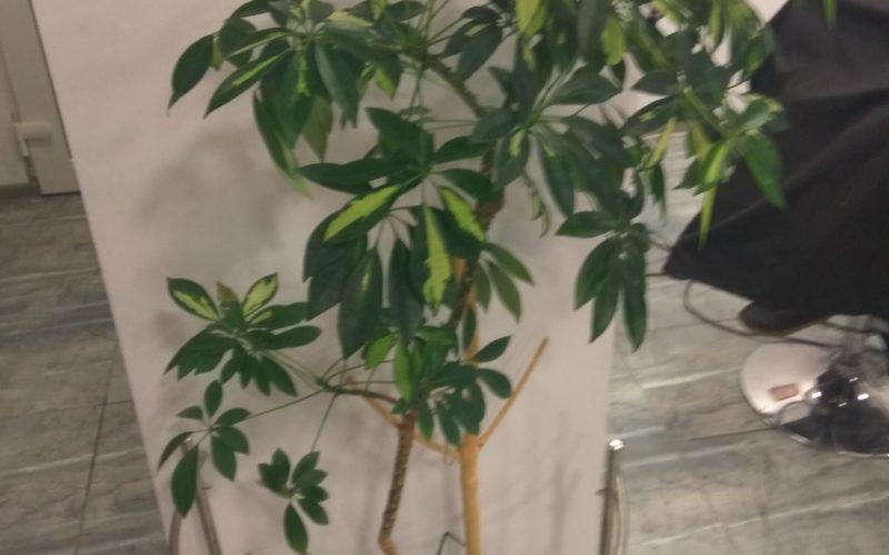 Листья зелёные с желтым
