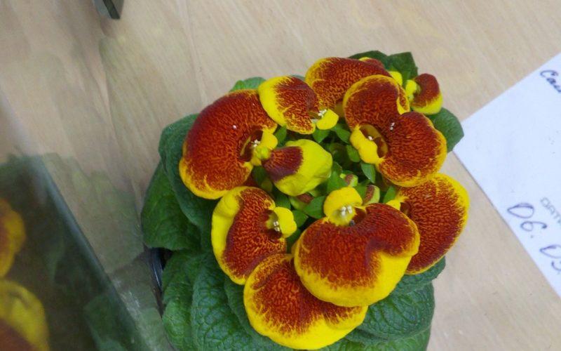 Зеленое с жёлто коричневыми цветами