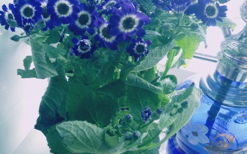 Цвет с голубыми цветочками