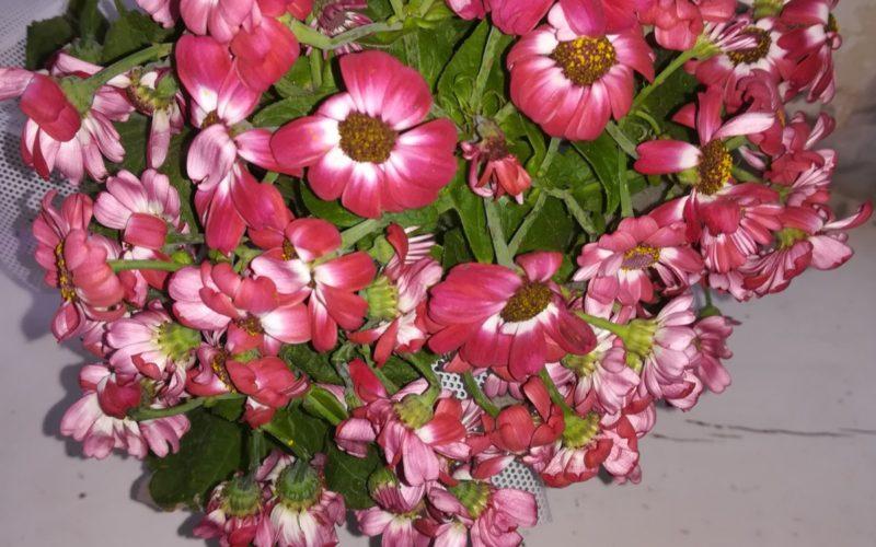 Комнатной растение с красными цветками