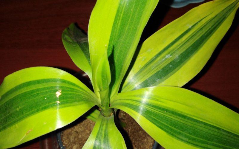 Зелёные удлинённые листики, по краям светлее
