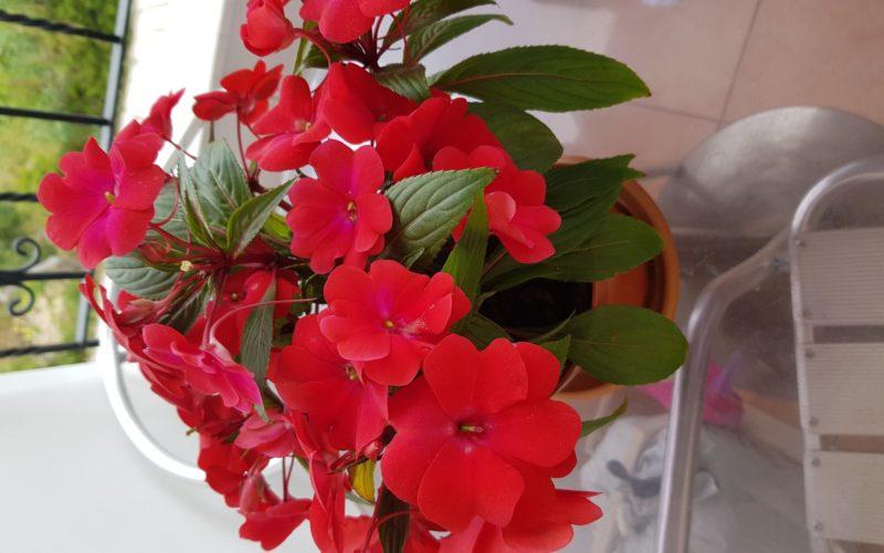 Зеленое растение красными цветами