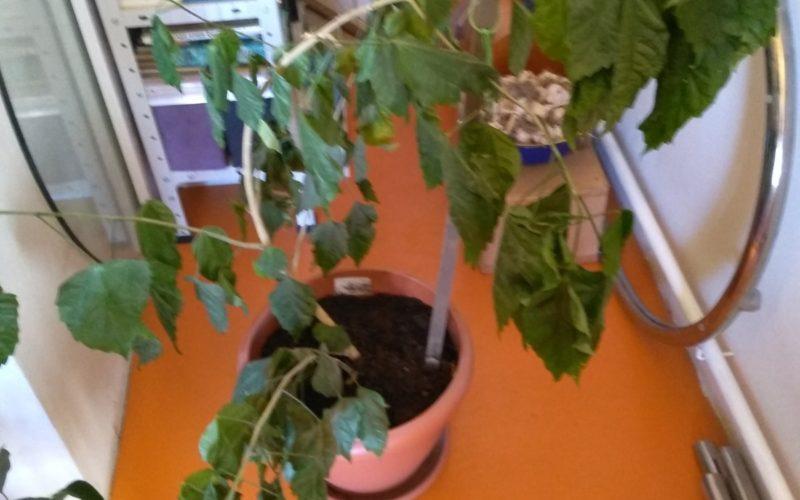 Зеленое растение с зелеными листьями