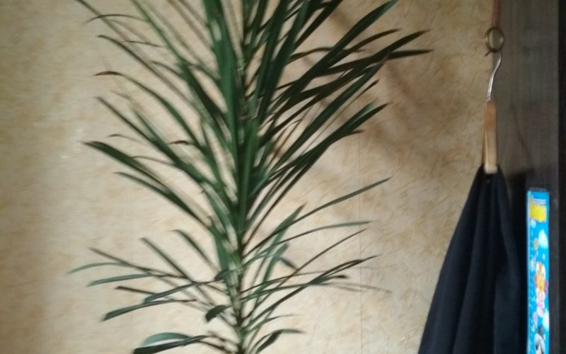 Зелёное растение без цветков