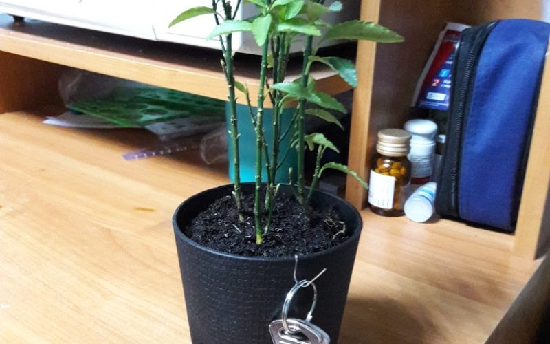 зеленое растение с четырьмя стеблями
