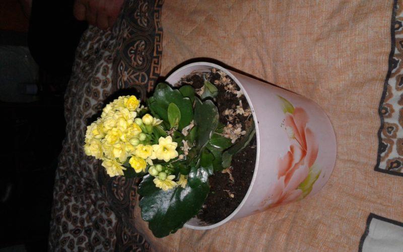 зеленое растение с делтыми цветами
