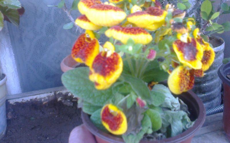 зеленое растение с желтыми цветами