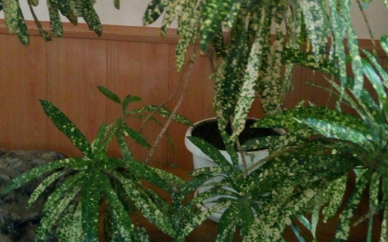 светло-зеленое растение с белыми крапинками