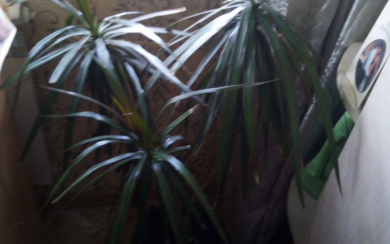 Растение с зелёными листьями