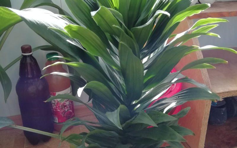 Цветок с зелёными листьями